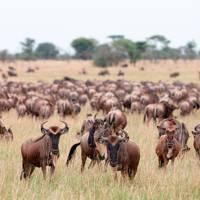 Safari season: Sudan