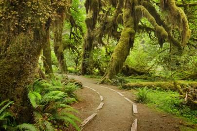 Washington: Hoh Rain Forest, Olympic National Park