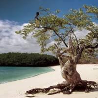 12. Tortuga Bay, Santa Cruz Island, Galápagos
