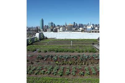 Brooklyn Grange Rooftop Farm, New York